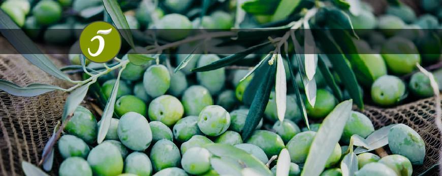 Aceite de oliva lampante
