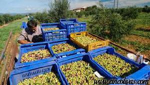 Transporte_y_Recepción_del_aceite_de_oliva1