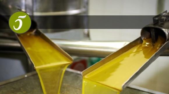 Producción y Elaboración del Aceite de Oliva